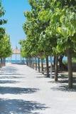 有绿色树的胡同在导致海的行 免版税图库摄影