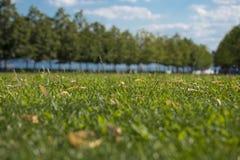 有绿色树的草坪在罗斯福岛在纽约美国 库存图片
