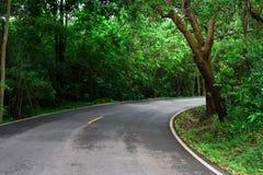 有绿色树的路 免版税图库摄影