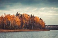有黄色森林和湖的,秋天风景美丽的森林 图库摄影