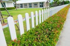 有绿色植物树篱的白色木尖桩篱栅 免版税库存照片