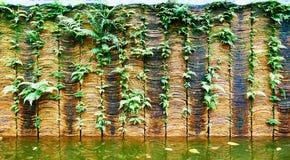 有绿色植物的墙壁 库存图片