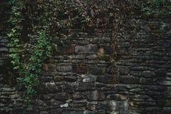 有绿色植物的石墙 免版税图库摄影