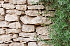 有绿色植物的米黄白色粗砺删节的岩石墙壁 免版税库存图片