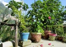 有绿色植物的蓝色和棕色罐 库存图片