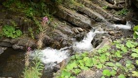 有绿色植被和紫色花的美丽的山河 股票视频