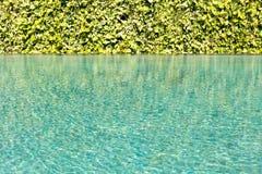 有绿色游泳池的绿色叶子背景藤墙壁起了波纹 库存照片