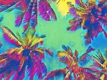有绿色的棕榈树冠在彩虹天空离开 椰子树树顶面数字式例证 意想不到的海报 免版税库存图片