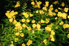 有黄色自然花的假山花园-美好的背景 库存图片