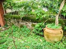 有绿色花的庭院 免版税库存照片
