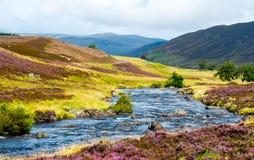 有紫色花的河在苏格兰高地 免版税库存图片