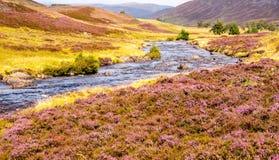 有紫色花的河在苏格兰高地 免版税库存照片