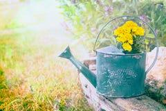有黄色花的老绿色喷壶在夏天庭院背景 免版税库存照片