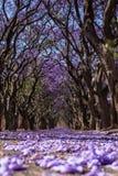 有紫色花的街道 免版税库存照片