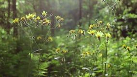 有黄色花的野生深绿色植物在风挥动 调遣结构树 关闭 股票录像