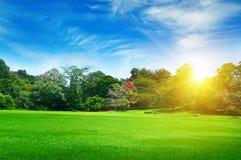 有绿色草坪的夏天公园 免版税库存图片