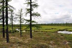 有绿色草甸和杉木的湖 有在深蓝天空的许多灰色云彩 在雨前的天气 免版税库存照片