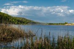 有黄色草的湖 图库摄影