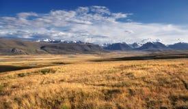 有黄色草的高地河谷在积雪的高山和冰川背景  免版税库存照片