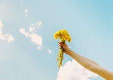有黄色蒲公英花束的女性手  库存图片