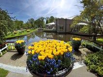 有黄色郁金香和风信花的花瓶 免版税库存照片