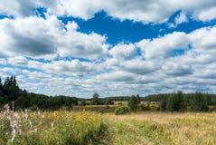 有黄色野花和乡下公路的草甸 免版税库存照片