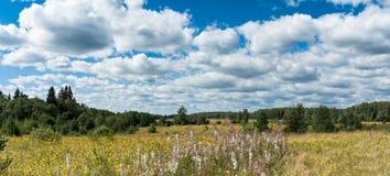 有黄色野花的草甸在森林全景风景附近 库存照片