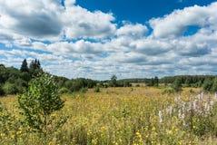 有黄色野花的草甸 免版税库存图片