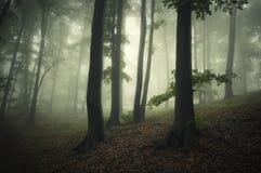 有绿色雾的幻想森林 图库摄影