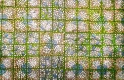 有绿色青苔的石走道 库存图片