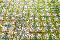 有绿色青苔的石走道 免版税库存照片