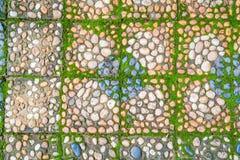 有绿色青苔的石走道 免版税图库摄影