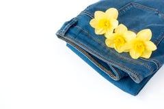 有黄色水仙花的牛仔裤在口袋 图库摄影