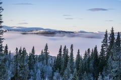 有紫色阴霾的有雾的森林 图库摄影
