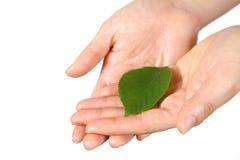 有绿色leaf 的手 图库摄影