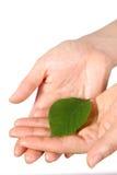有绿色leaf 的手 免版税库存照片