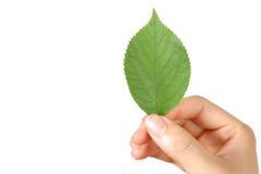 有绿色leaf 的手 免版税库存图片