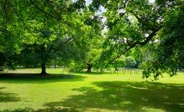 有绿草和大树的晴朗的草甸 免版税图库摄影