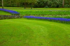 有绿草的夏天草坪 库存照片