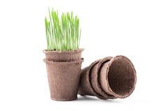 有绿草的泥煤罐在白色 库存照片