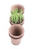 有绿草的泥煤罐在白色 库存图片
