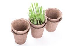 有绿草的泥煤罐 免版税库存图片