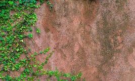 有绿草的混凝土墙 图库摄影