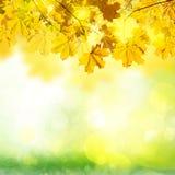 有绿草的秋天叶子 免版税库存图片