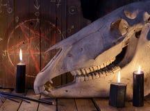 有黑蜡烛和五角星形的可怕马头骨 库存照片