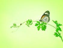 有蝴蝶和瓢虫的绿色爬行植物在绿色bac 免版税库存照片