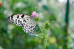 有蝴蝶的绿色植物 免版税图库摄影