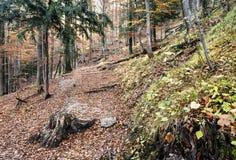 有破裂的褐色的落叶林在秋天离开 免版税库存图片