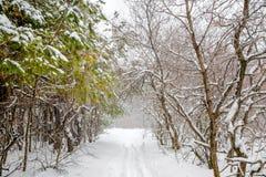 有暴风雪和小径的新年神奇冬天森林 免版税库存图片