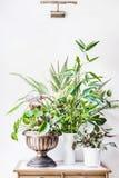 有绿色热带室内房子植物的各种各样的容器在桌上安排了在白色墙壁背景:叶子秋海棠,竹子,好朋友 免版税库存图片